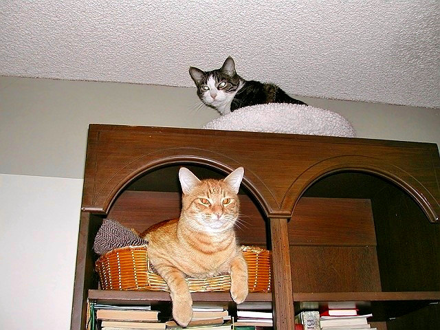 Hunter and Joey in their penthouse
