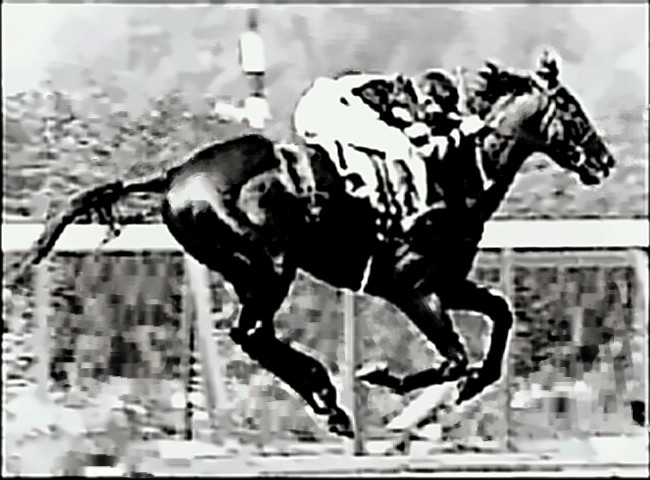 War Admiral - Beautiful Horse